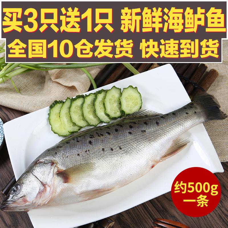 1条/约500克鲈鱼鲜活海鱼新鲜水产海鲜深海七星花海鲈鱼野生