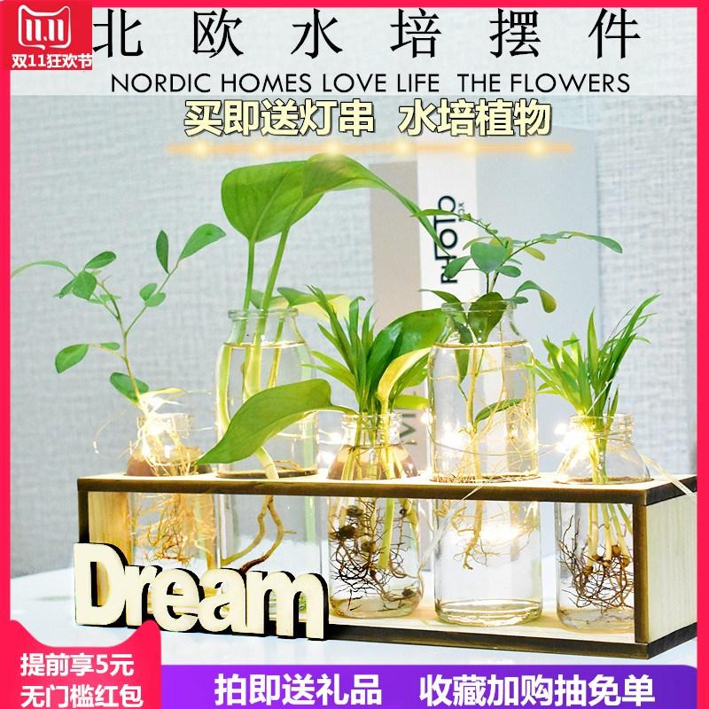 创意绿萝水培植物玻璃花瓶插花器办公室桌面摆件水培植物花盆器皿