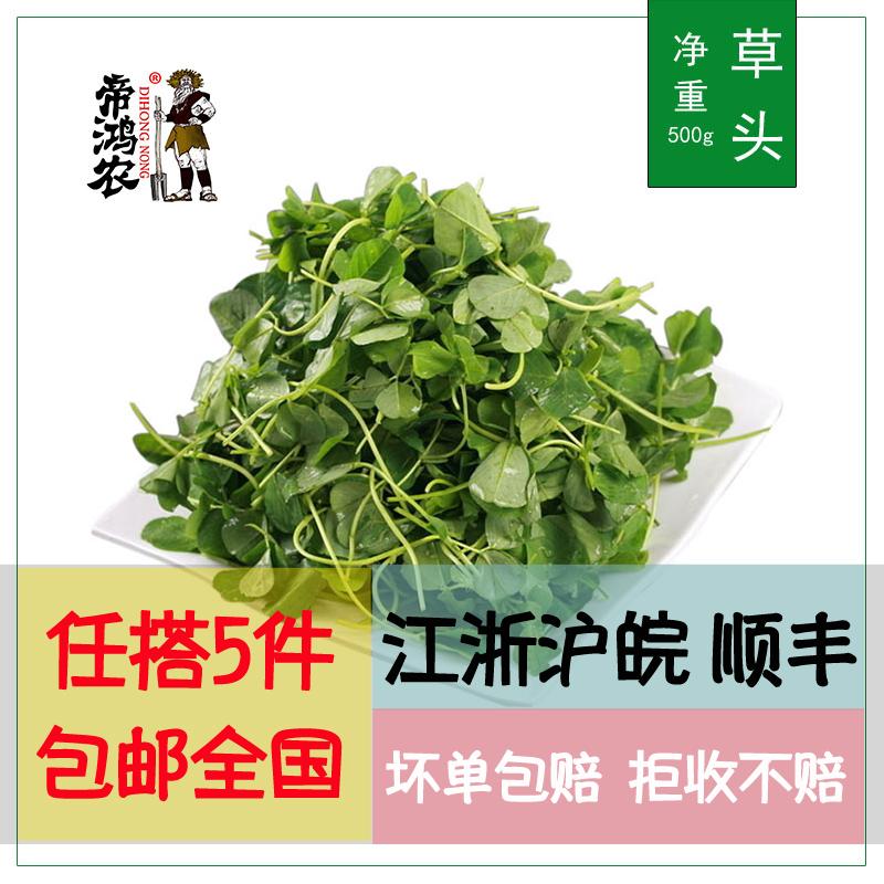 【5件包邮8件8.8折】草头500g金花菜上海本地草