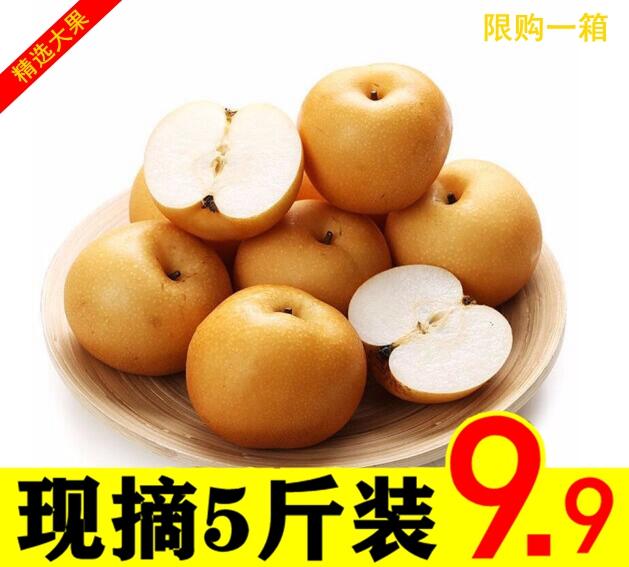 湖北秋月梨丰水世纪新鲜梨子香甜多汁冰糖味孕妇水果精品大果5斤