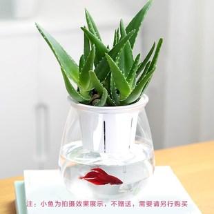 装饰发财大叶常绿大盆小植物 盆栽易活空气芦荟新手水培发财树水