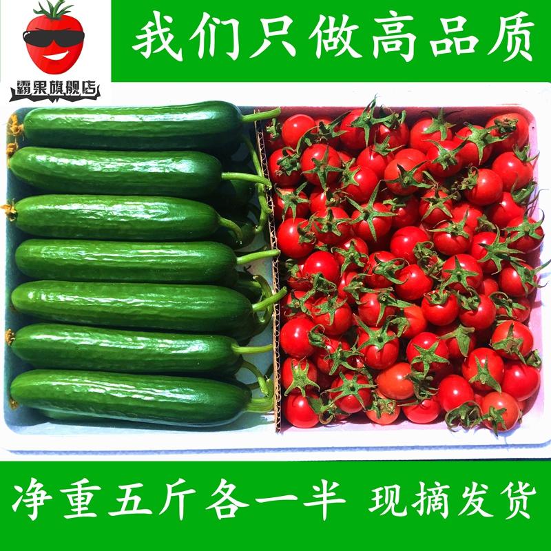 新鲜圣女果 小番茄西红柿 圣女果 水果小黄瓜5斤混装农家蔬菜包邮