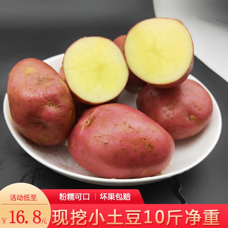现挖新鲜红皮黄心小土豆高山粉糯洋芋10斤云南农家有机蔬菜马铃薯