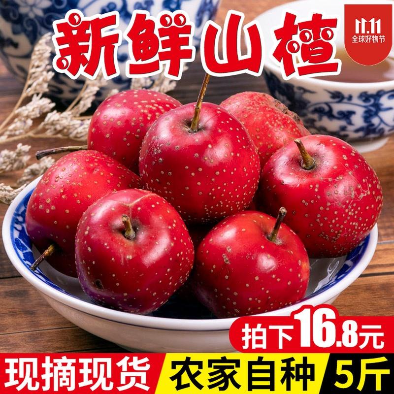 新鲜山楂果5斤特级鲜山楂水果现摘现发生山楂大山楂颗粒山里红果
