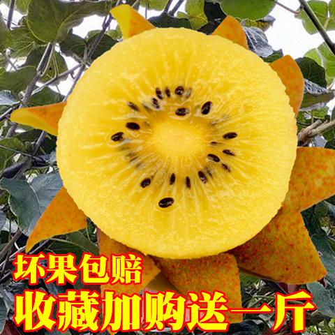 黄心猕猴桃黄肉新鲜奇异果西峡水源心农酸甜小果整箱包邮孕妇水果