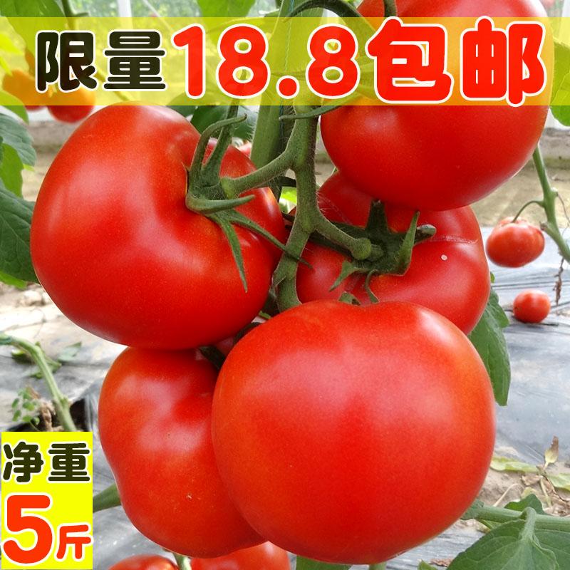 攀枝花西红柿5斤新鲜蔬菜番茄农家孕妇水果普罗旺斯纯天然自然熟