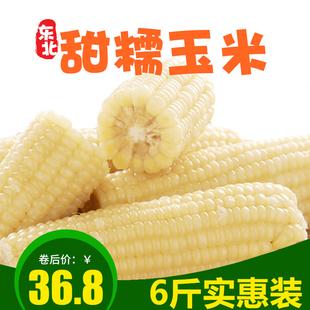 地尖300克*10穗甜糯速冻东北粘新鲜玉米甜糯黑龙江玉米棒农家玉米
