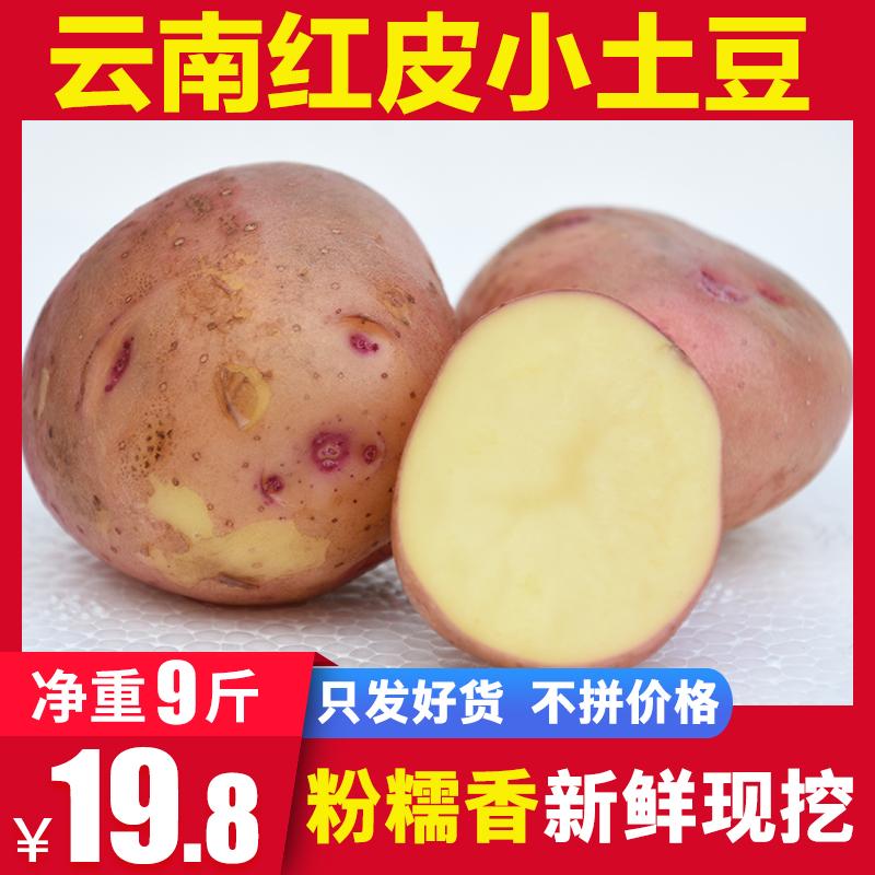 云南红皮小土豆 新鲜黄心现挖蔬菜农产品新马铃薯洋芋净重9斤非10