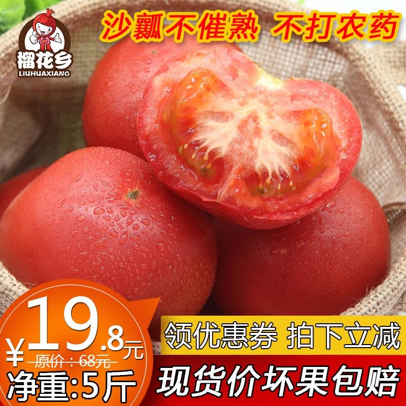 现摘沙瓤自然熟西红柿番茄新鲜水果孕妇农家纯天然时令蔬菜 5斤装