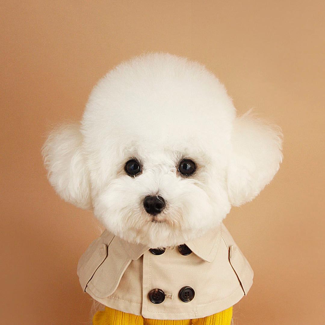 狗狗风衣斗篷泰迪比熊法斗英伦风绑带口水巾狗狗围脖宠物风衣领子