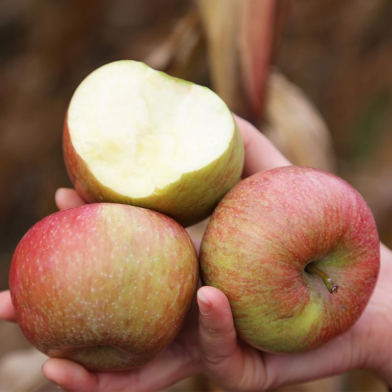 密云农家 正宗老树国光小苹果 酸甜50年老树 新鲜水果2.5斤装包邮