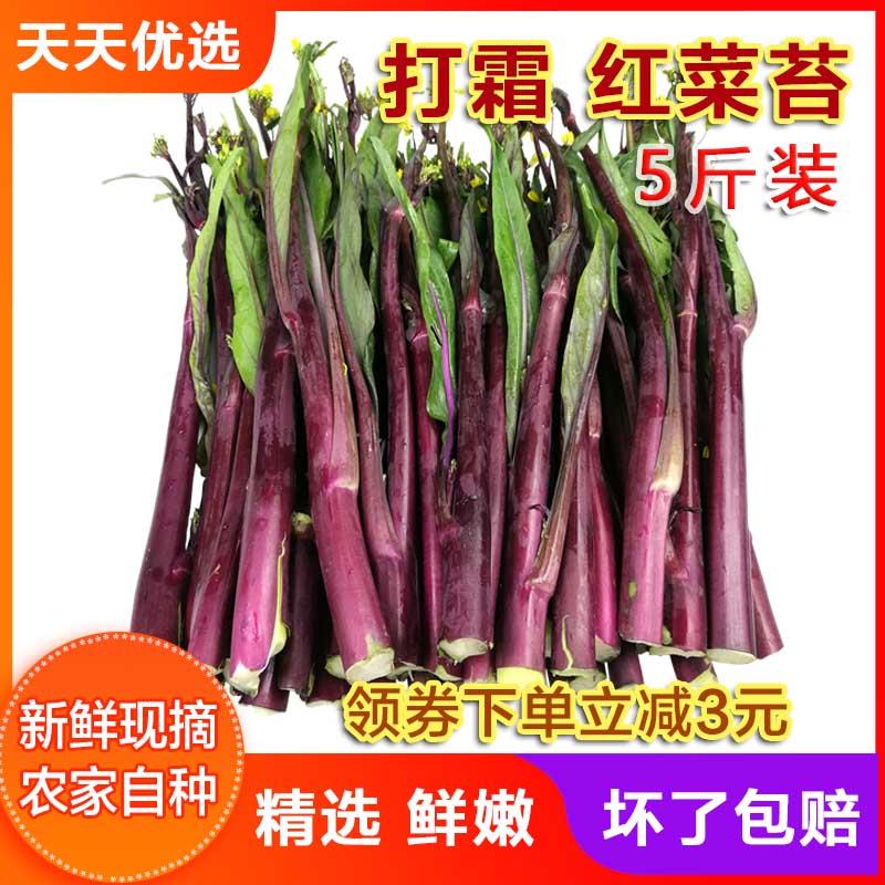 新鲜红菜苔湖北特产紫菜苔洪山菜苔菜薹纯天然绿色时令蔬菜嫩 5斤