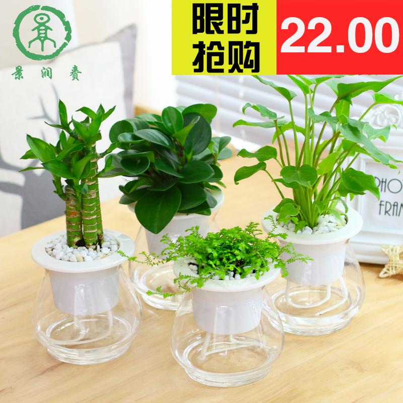 富贵竹盆栽花卉转运竹子水生水养碧玉室内去甲醛铁线蕨类水培植物