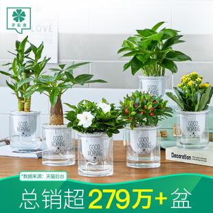 办公室内好养小栀子花水培盆栽花卉