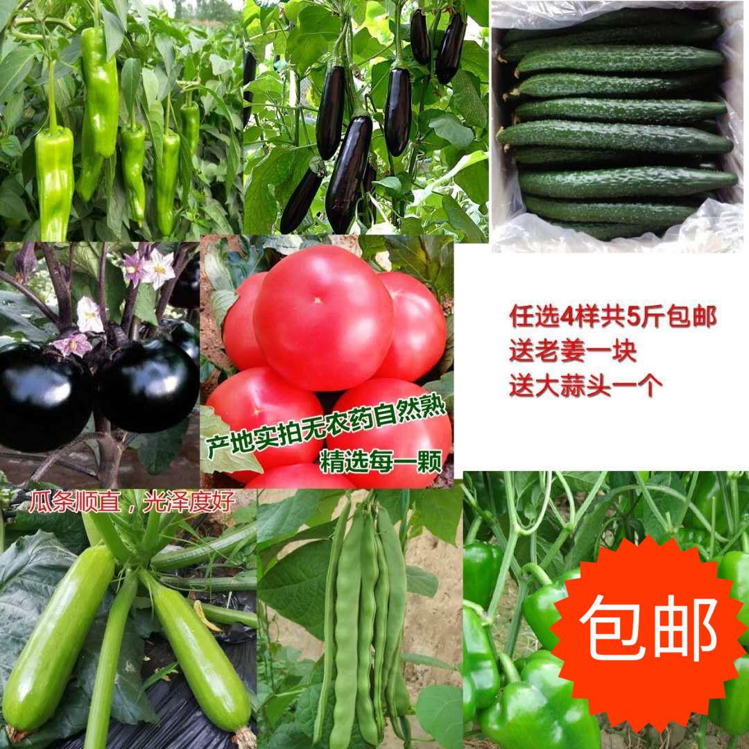 本店上架的多种新鲜蔬菜任选自由搭配3样满5斤包邮山东省产地直销