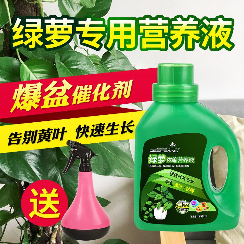 绿萝专用营养液植物叶子发黄土培水培吊兰肥料室内盆栽植物液体肥