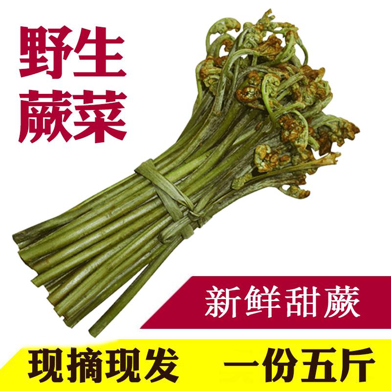 5斤包邮贵州野生新鲜蕨菜 猫爪菜 现摘现发可晒干 新鲜野生龙头菜