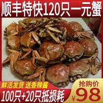 六月黄100只装1一元蟹小螃蟹香辣蟹鲜活大闸蟹河蟹麻辣小闸蟹水产