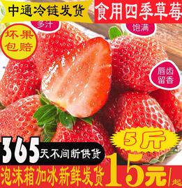 云南现摘现发新鲜四季商用草莓孕妇小孩水果红颜久久非丹东偏酸甜