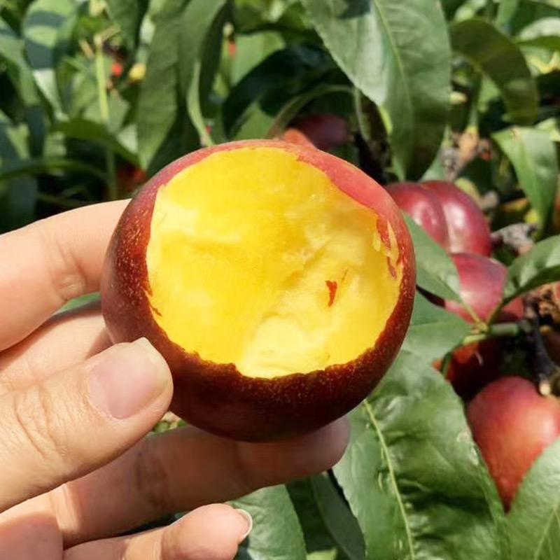 黄油桃桃子现货5斤新鲜水果当应季大桃子孕妇脆甜非水蜜桃
