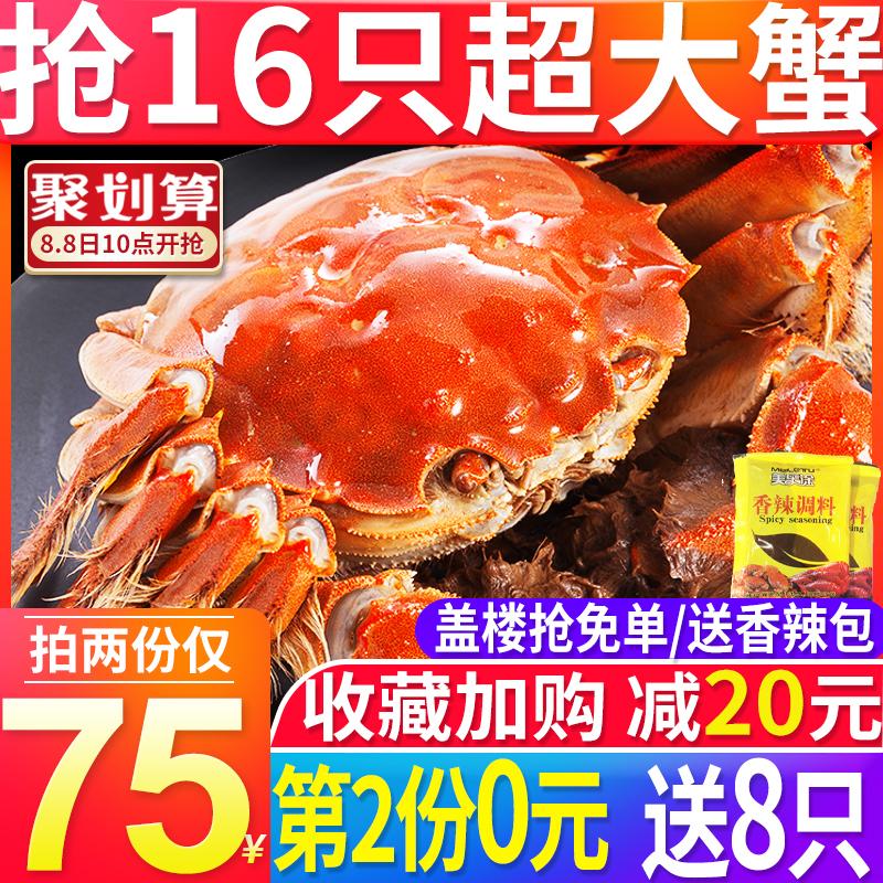 【抢第2份0元】大闸蟹鲜活现货六月黄特大蟹海鲜水产鲜活螃蟹鲜活图片