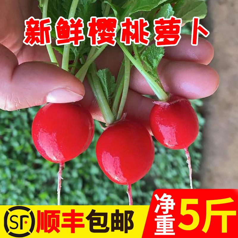 樱桃萝卜新鲜水萝卜青菜圆红萝卜新鲜农家蔬菜现摘水果迷你小萝卜