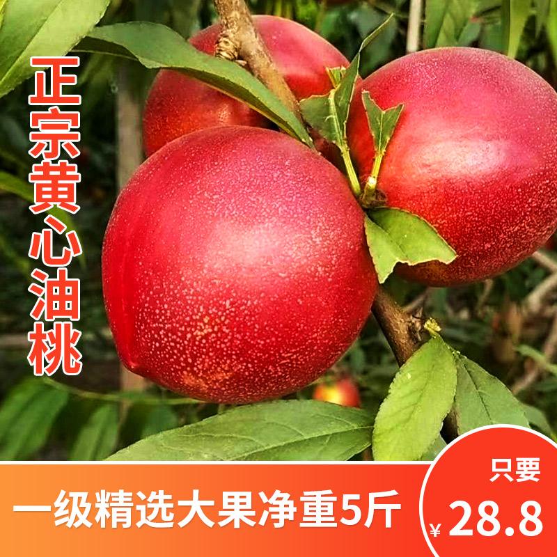 精选大果油桃新鲜黄肉脆甜桃子5斤当季现摘孕妇整箱水果非水蜜桃