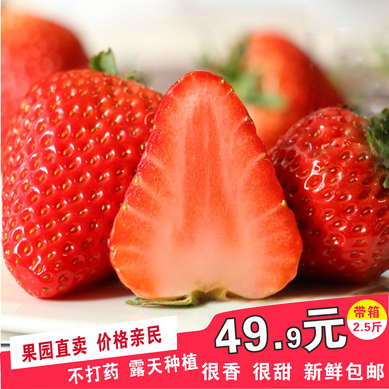 草莓新鲜包邮巧克力非丹东99奶油小草莓双流冬草莓孕妇当季水果