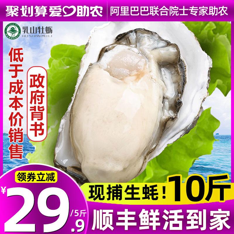 乳山生蚝鲜活5斤新鲜海蛎子特大海鲜牡蛎贝壳即食水产10现捕现发