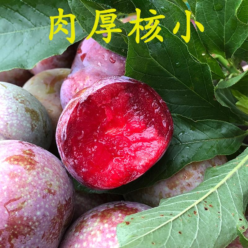 现货3斤】广东省红心三华李水果新鲜李子酸脆孕妇三月樱桃李包邮