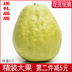 Guava Baixin Fresh package of Guangxi specialty 5 pounds Ba Le Pan pomegranate Ba Le fruit season box of fruit