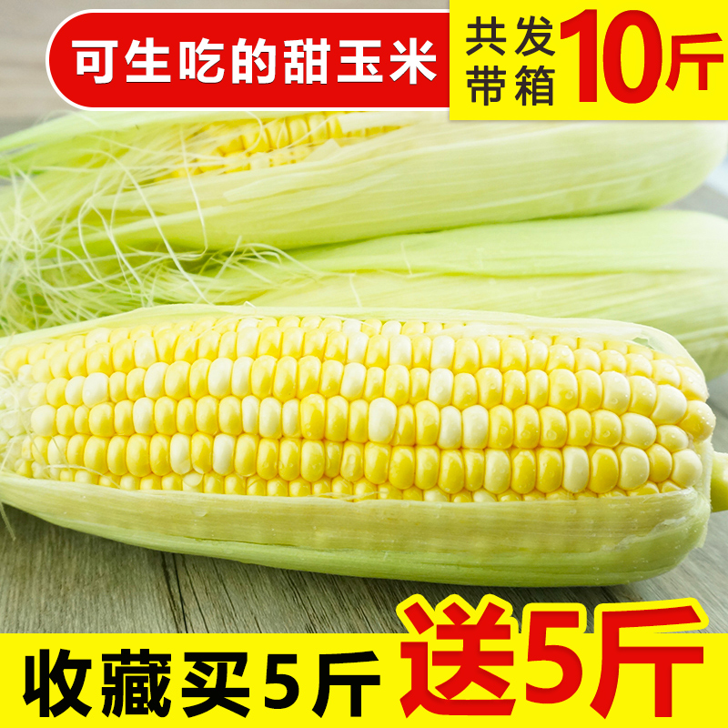现摘现发甘肃水果玉米带箱9-10斤新鲜应季甜玉米棒生吃蔬菜包邮