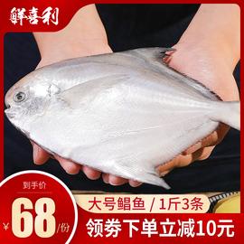银鲳鱼新鲜冷冻包邮海鱼野生扁鱼特大鲳鳊鱼深海白鲳鱼舟山市特产