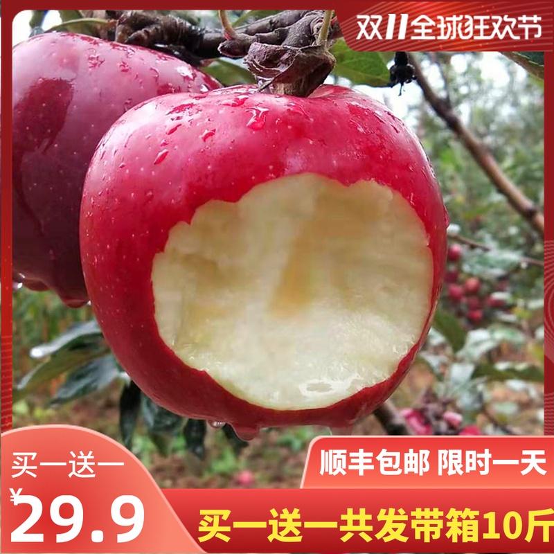 买一送一甘肃天水礼县高山花牛苹果现摘现发新鲜水果蛇果刮泥粉