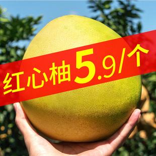 漳州平和琯溪红心10斤新鲜小沙田柚