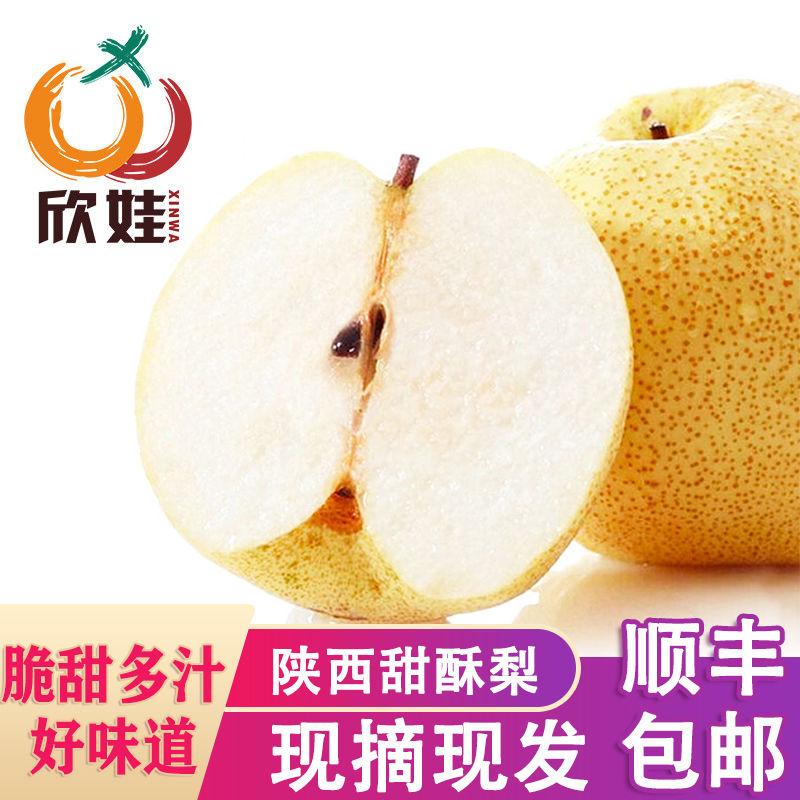 【欣娃生鲜零食】陕西蒲城酥梨5斤脆甜梨子新鲜当季水果非雪花梨