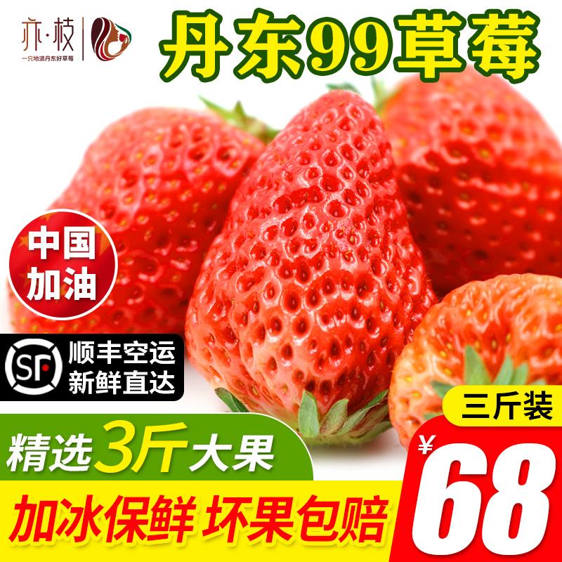 草莓新鲜丹东99草莓九九牛奶草莓久久红颜奶油大草莓3斤顺丰包邮