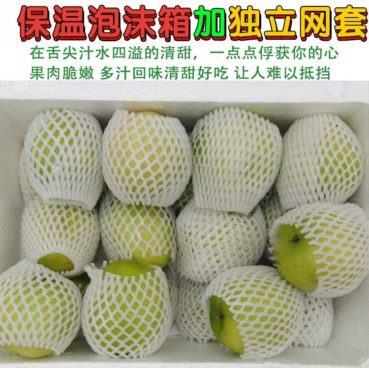 台湾牛奶大青枣 新鲜脆清甜奶油特级大冬枣非云南5斤当季水果套袋