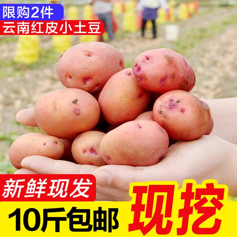 云南红皮黄心迷你小土豆新鲜助农蔬菜产品10斤整箱包邮洋芋马铃薯
