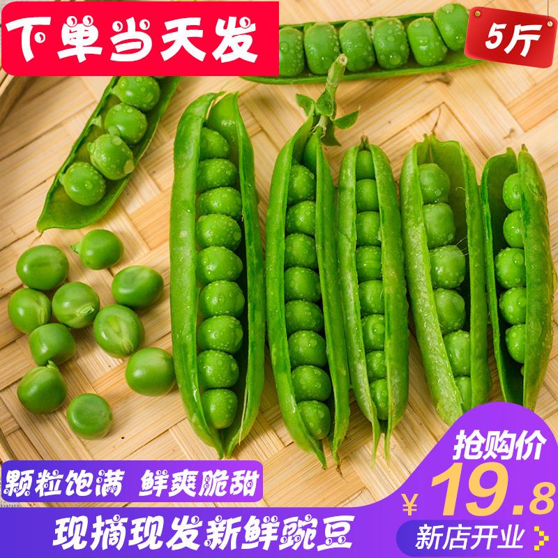 净重5斤云南带壳豌豆荚毛豆四季豆青豆蚕荷兰甜豆角新鲜农家蔬菜