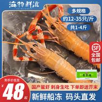 舟山海鳌虾野生螯虾深海小龙虾新鲜船冻海鲜宁波水产日料刺身生吃