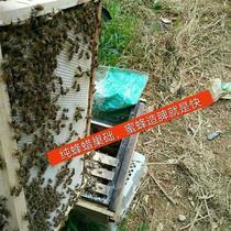 新巢础机础压机压机蜜蜂巢础y制作式养蜂工具压巢中蜂巢手机模具