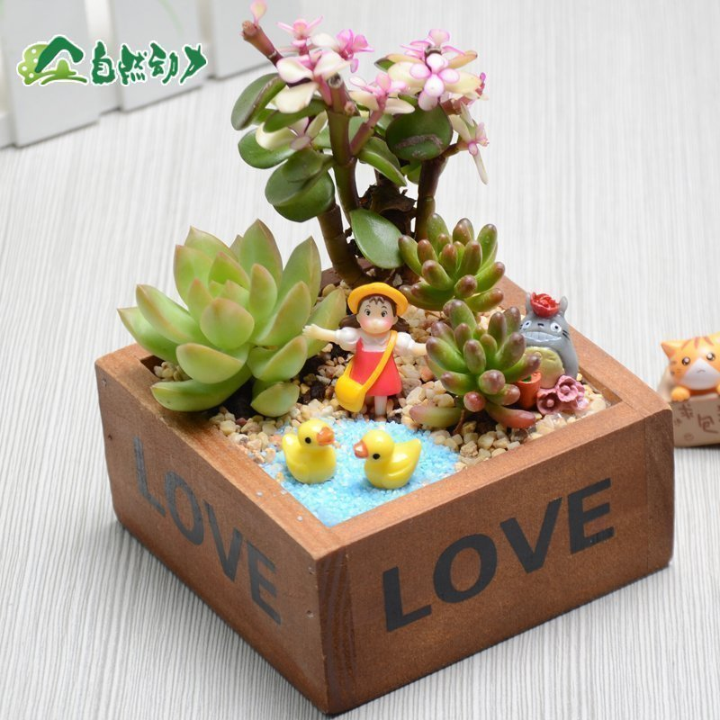 自然动力多肉组合盆栽微景观苔藓生态瓶创意迷你盆栽植物diy礼物