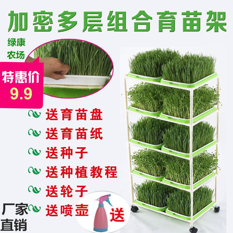 育苗盘芽苗菜种植盘豆芽菜豆苗种植盆纸上种菜小麦草种子托盘塑料