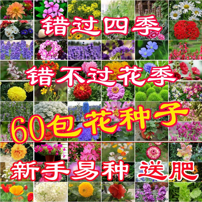 点击查看商品:花种子室内植物四季种易活阳台盆栽开花不断花卉秋冬适合冬天花籽
