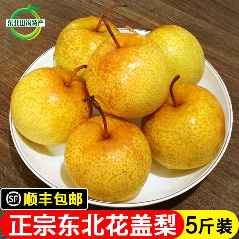 正宗花盖梨东北鞍山特产软梨酸梨子新鲜水果可以做冻梨 5斤包邮