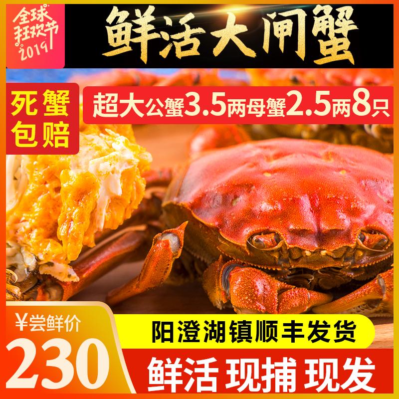 现货正宗大闸蟹特大螃蟹公蟹3.5两母蟹2.5两8只鲜活水产顺丰包邮