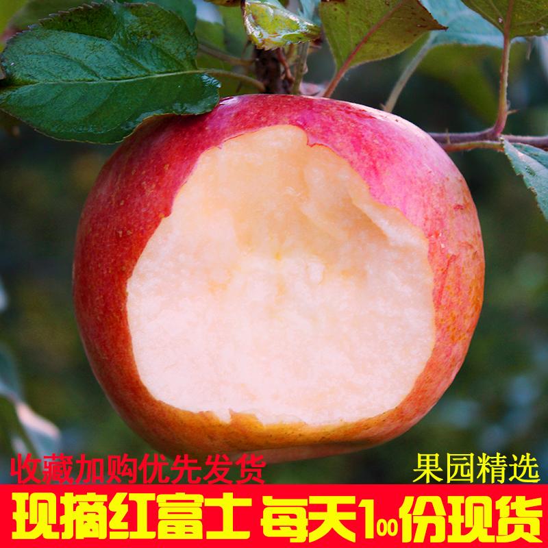 苹果水果新鲜当季5斤10斤带箱早熟红富士批应季山西大沙河丑苹果