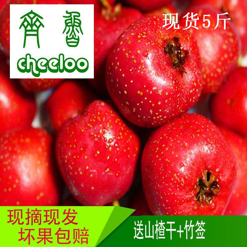 山楂果新鲜农家绿色纯天然大金星大果酸甜水果冰糖葫芦5斤装 包邮