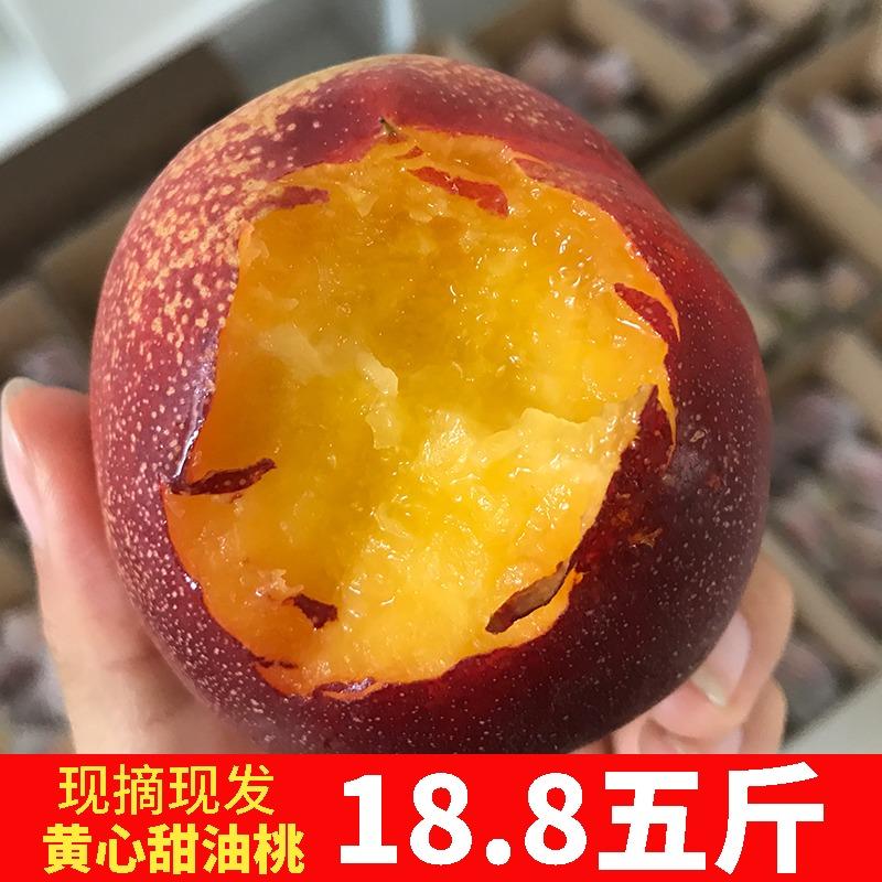 桃子水果新鲜水蜜桃脆甜带麻点黄心大油桃孕妇山东沂蒙山带箱5斤